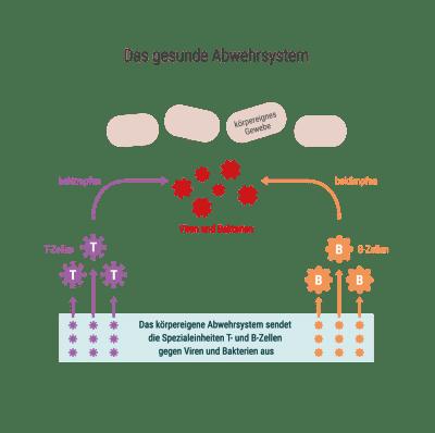 20130322_Infografiken_Immunsystem-01