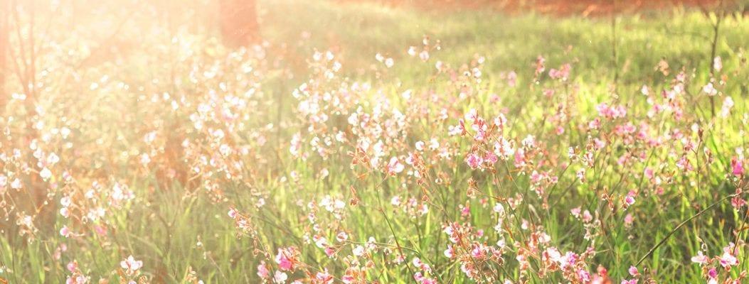 Blumenwiese im Wald